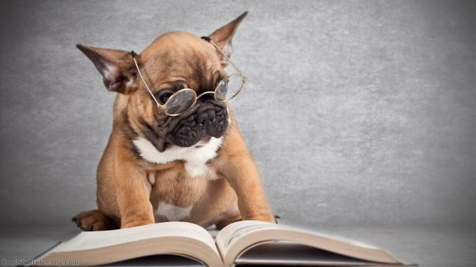 Dog-Reading-book1