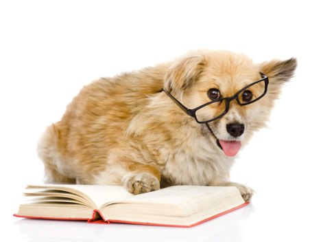 dog-reading-book-wearing-glasses