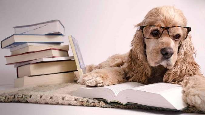 header_bookworm